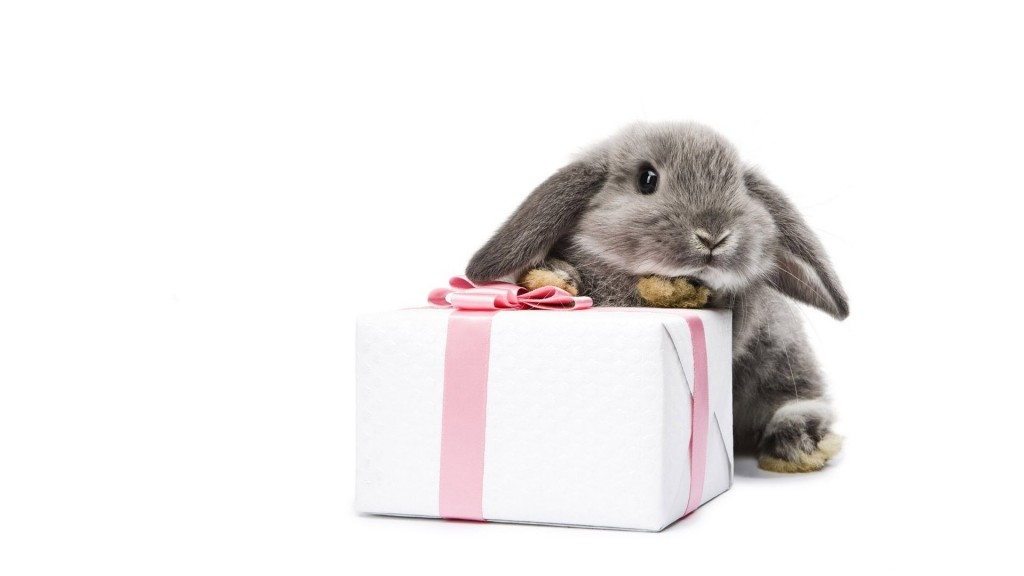 gray-bunny-with-a-present